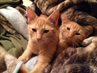 Kittens Jake and Elwood
